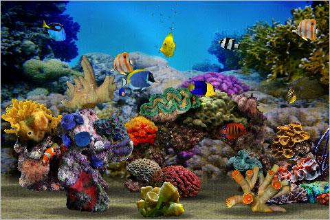 Myreef 3d aquarium un acquario tropicale tascabile su for Pesci per acquario tropicale