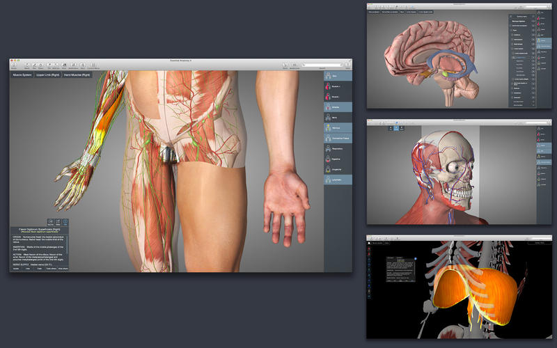 Essential Anatomy 4