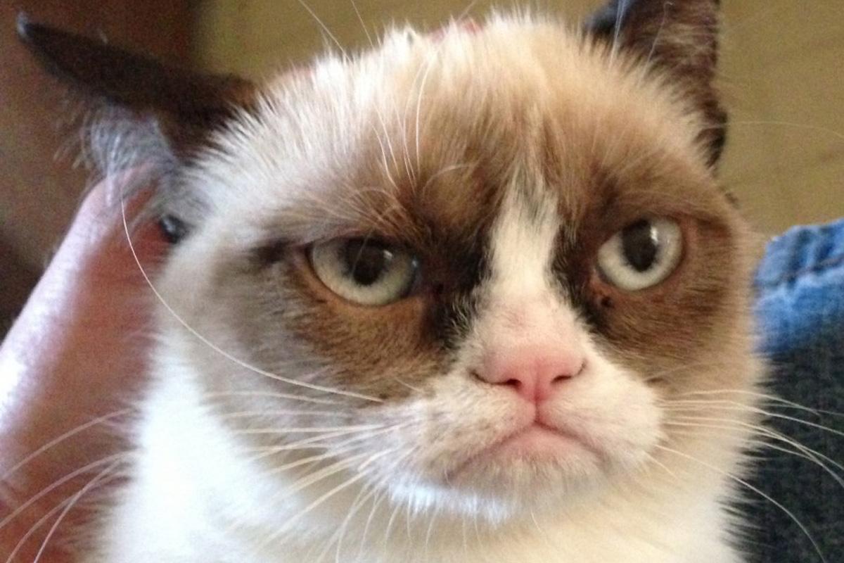 Grumpy Cat, il gatto da 40 milioni di euro all'anno