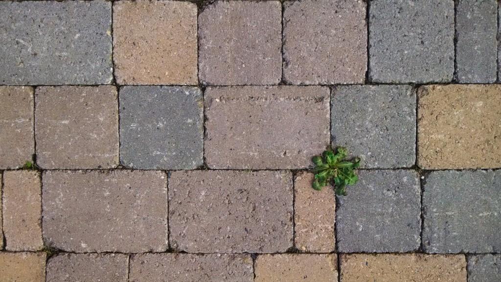 Il verde spicca fra le mattonelle