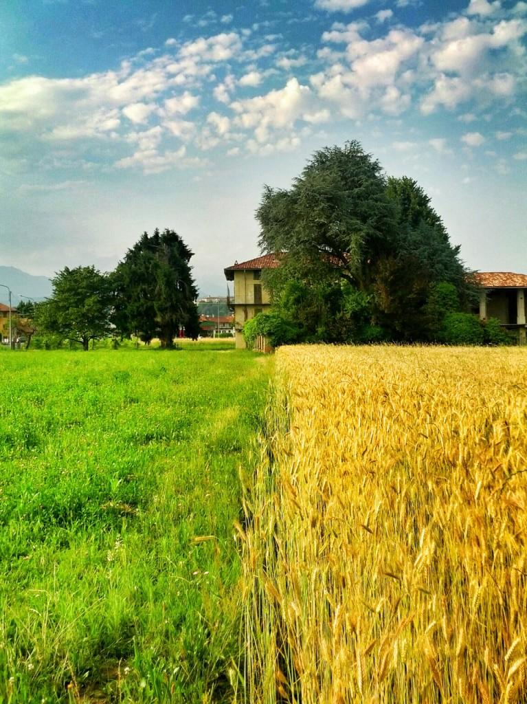 L'estremo contrasto fra il verde dell'erba, il giallo del grano e l'azzurro del cielo compongono l'immagine