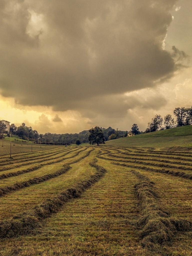 Le varie linee sul prato, i profili delle nuvole, la prospettiva e la linea dell'orizzonte guidano lo sguardo verso l'albero sullo sfondo