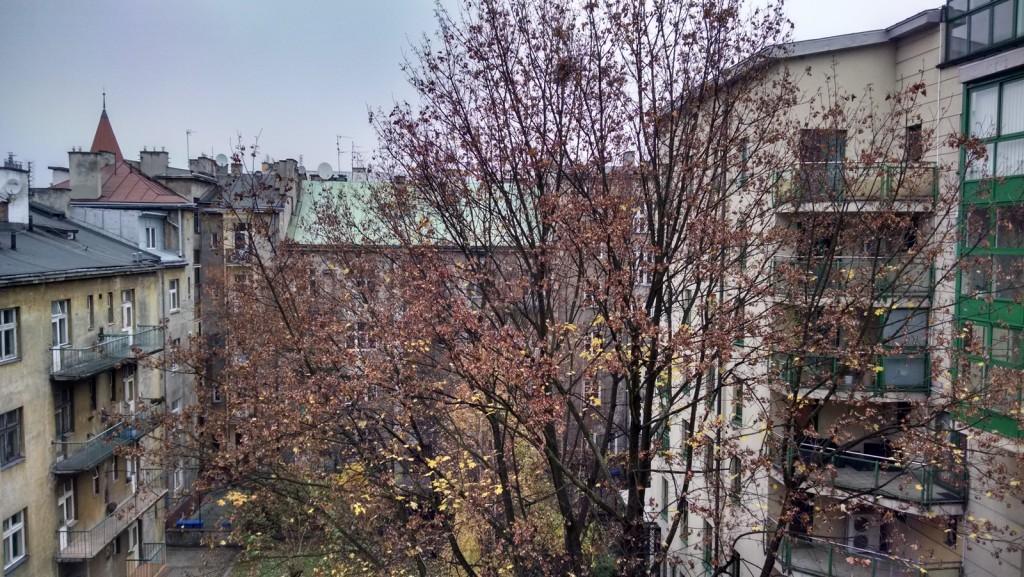 In questo scatto non si capisce quale sia il soggetto dell'immagine... l'albero e i suoi rami? il cielo? gli edifici?
