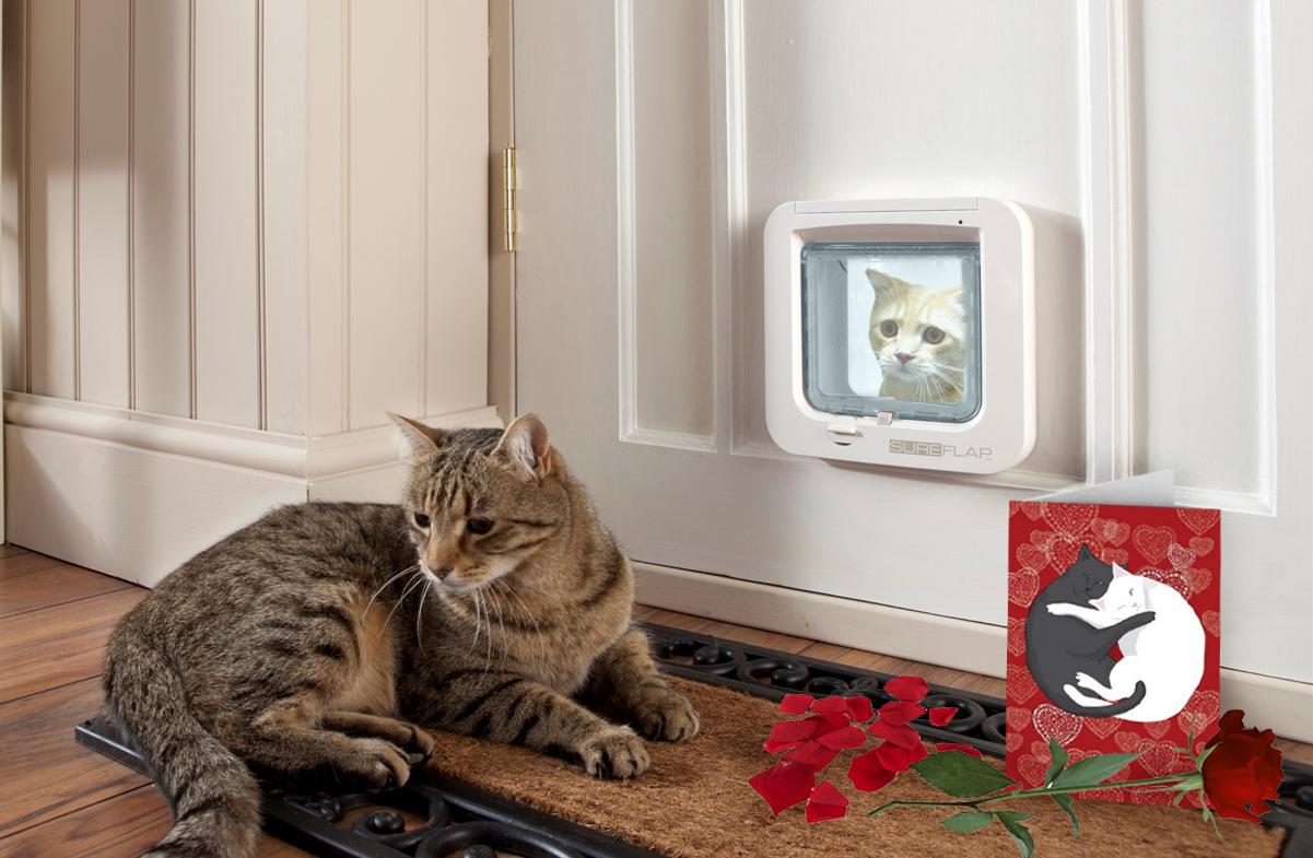 Sureflap la porta smart per cani e gatti - Porta per gatti ...