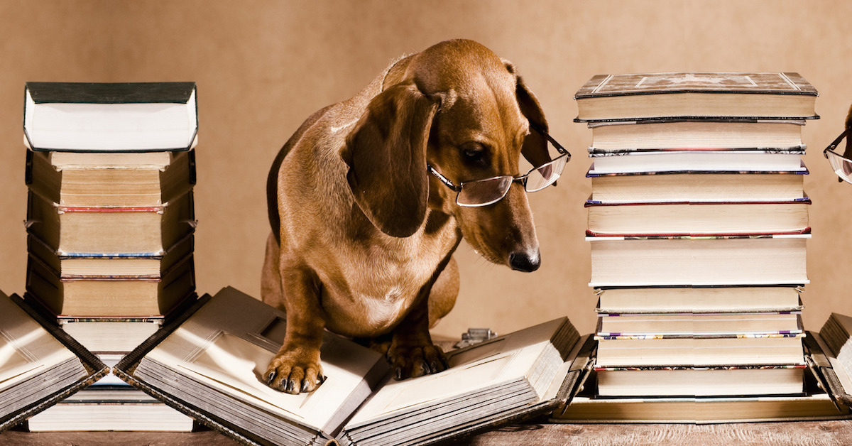 cane che legge
