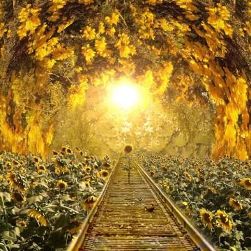 girasole sulla ferrovia