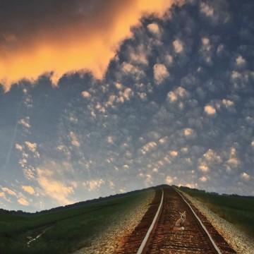 volpe su ferrovia