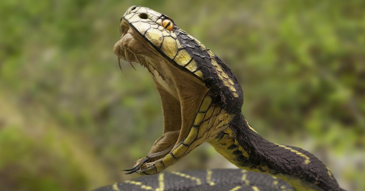 Scatta Selfie Con Serpente A Sonagli Ora Rischia L