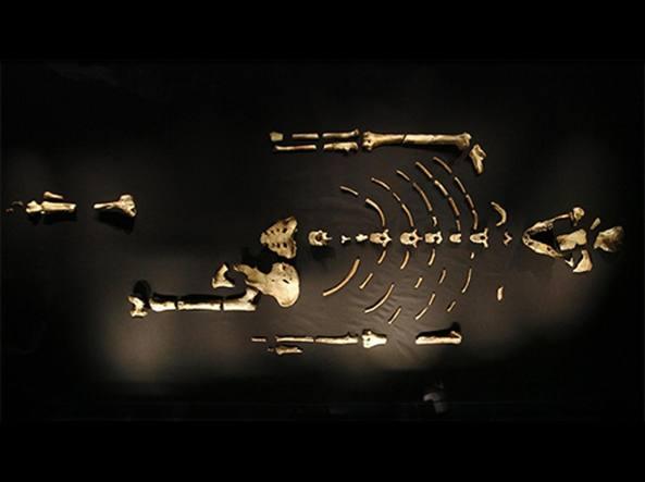 lucy scheletro