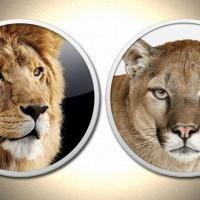 Lion e Mountain Lion