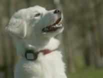 Vodafone Kippy, il localizzatore GPS per cani e gatti a 5 euro al mese