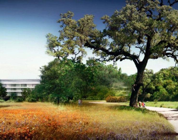 Rendering alberi nel nuovo campus Apple