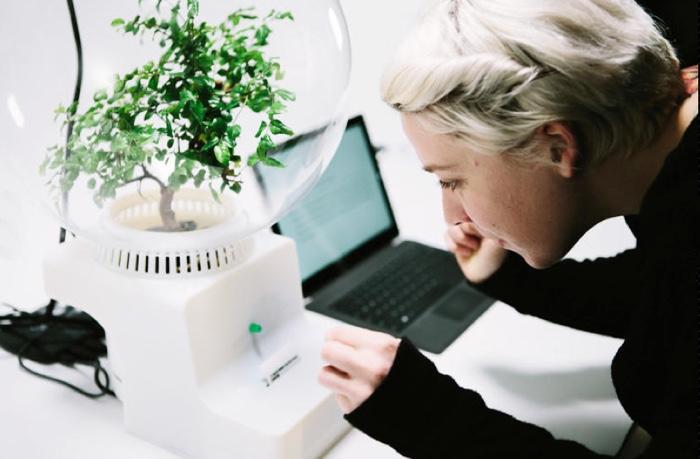 parlare con le piante microsoft 700