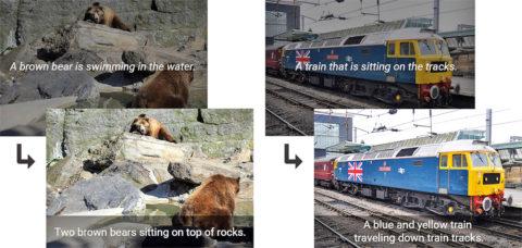 un orso o due orsi marroni che nuotano nell'acqua o stanno seduti sulle rocce