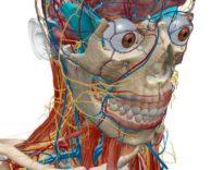 Atlante di anatomia umana Edizione 2017 a metà prezzo per Mac e iOS