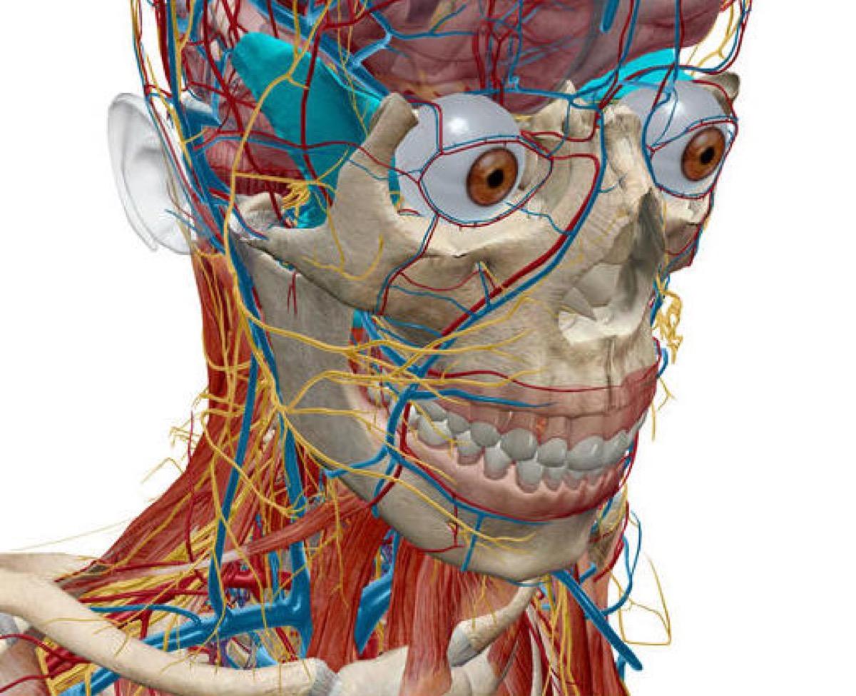 Atlante di anatomia umana Edizione 2017