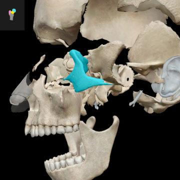 atlante anatomia ios mac 4