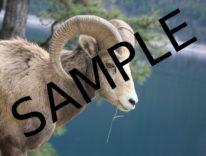 Rimuovere i watermark dalle immagini, Google crea algoritmo capace di farlo