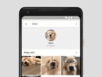 Google Foto ora riconosce anche il vostro animale domestico