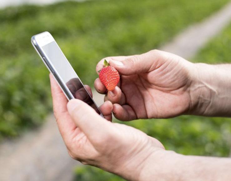 Smartphone e fragola