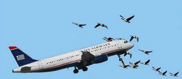 In arrivo i droni anti uccelli negli aeroporti