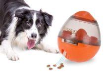 Accessori DadyPet, e i vostri cuccioli vi ameranno: sconti a partire da 8,99 euro