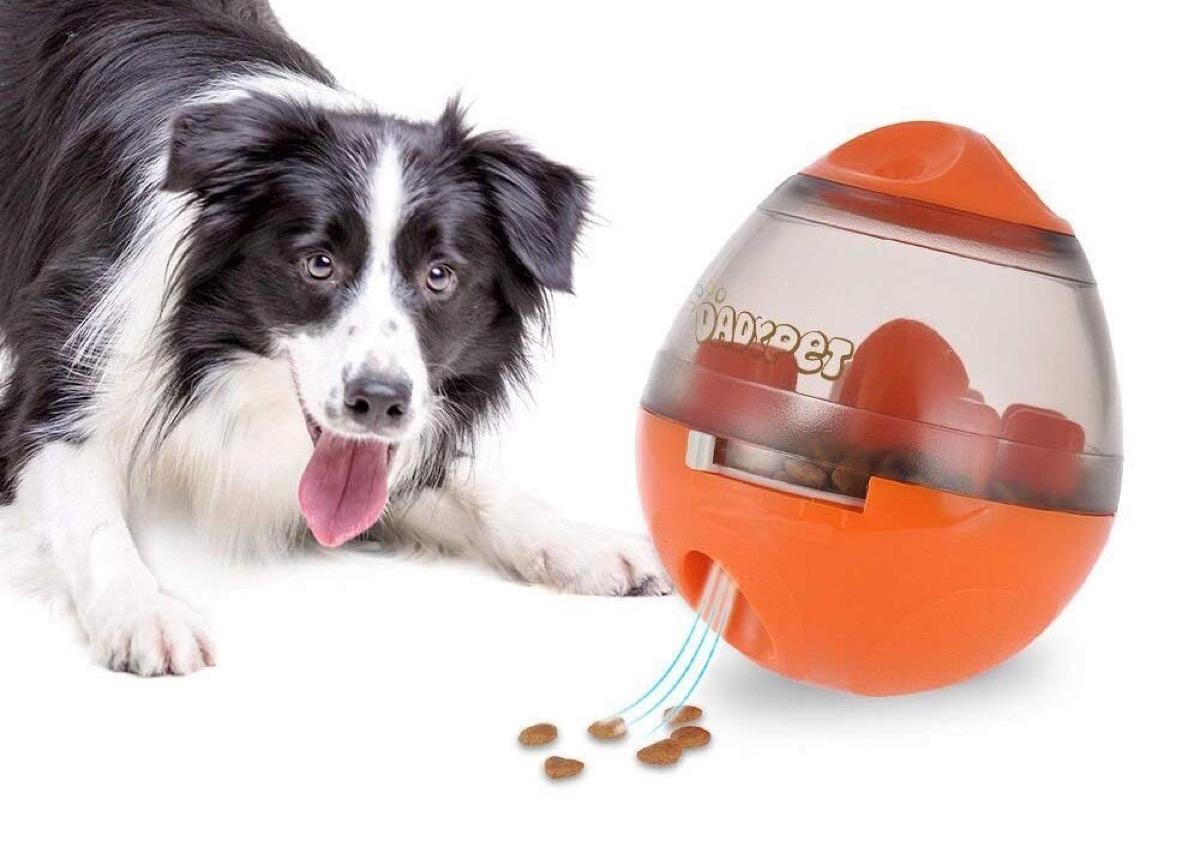 c82932763e Accessori DadyPet, e i vostri cuccioli vi ameranno: sconti a partire da  8,99. Prendetevi cura dei ...