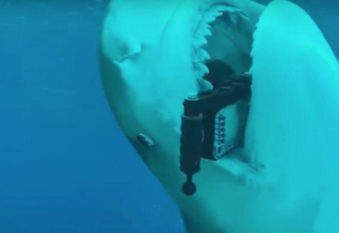 Anche agli squali piace iPhone: ecco il dietro alle quinte dello spot Apple