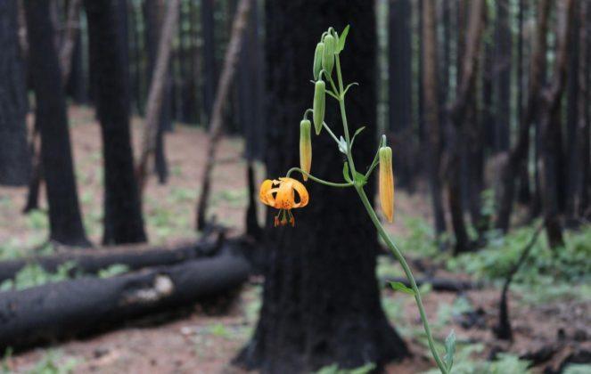 Una foto scattata con iPhone 6 vince al Columbia Gorge photography contest