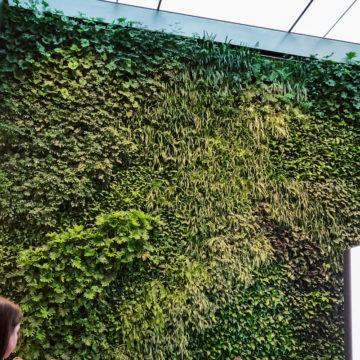 Riapre l'Apple Store Bondi in Australia con incredibili pareti verdi