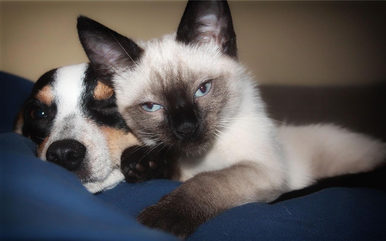 Con iOS 13 iPhone sarà presto in grado di riconoscere i vostri cani e gatti