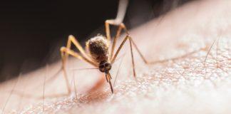Guida i migliori anti zanzare: diffusori smart, repellenti a ultrasuoni, elettrici e trappole ad aspirazione