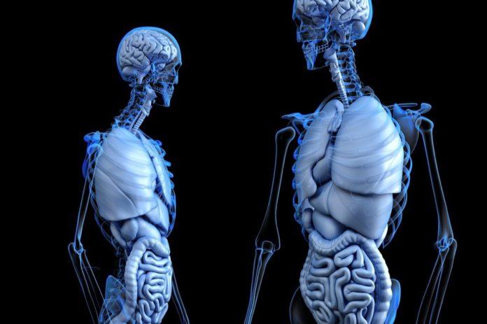 L'uso di organi umani stampati in 3D è sempre più vicino