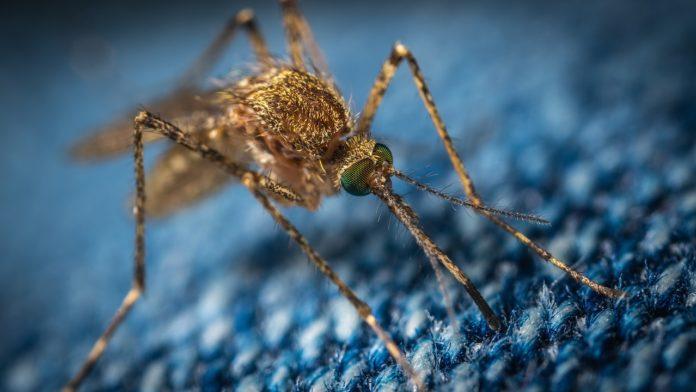 Ecco come gli scienziati combattono le zanzare
