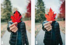 Un filmato mette a confronto la qualità di iPhone 11 Pro con una DSLR di Canon