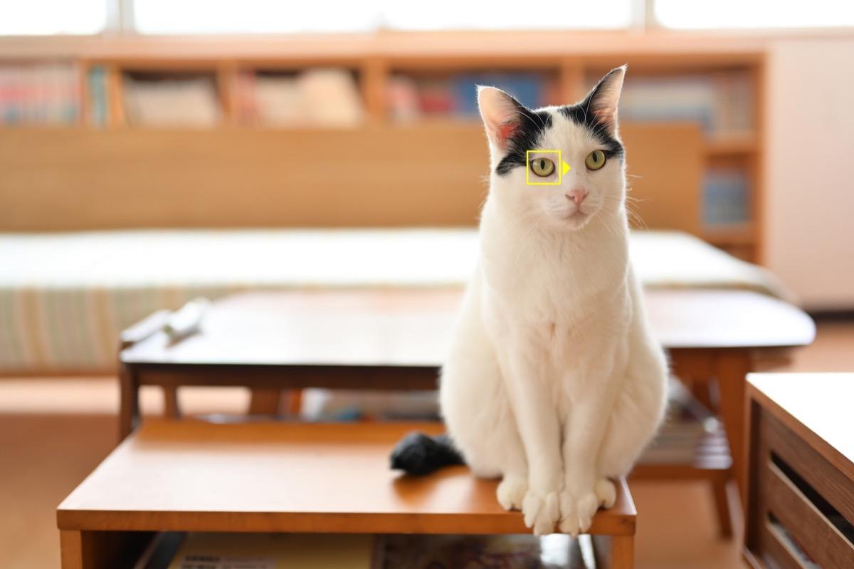 Le Nikon Z7 e Z6 ora riconoscono anche gli occhi e il muso di cani e gatti