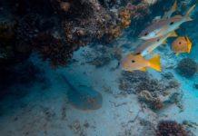 """""""Tidal"""" è il nome di un progetto che sfrutta l'IA di Google per per studiare gli oceani"""