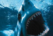 Apple Watch, in un brevetto di Apple un sensore per avvisare i nuotatori della presenza di squali