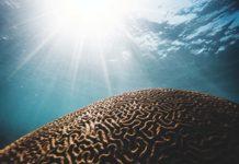 Il Mit ha creato un chip neumorfico con migliaia di sinapsi artificiali