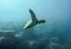 Le microplastiche negli oceani si individuano con l'Intelligenza Artificiale