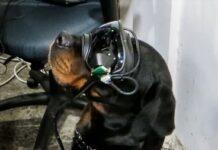 Occhiali AR in prova sui cani dell'esercito americano