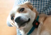 Recensione Pitpat 2, un Fitbit per cani