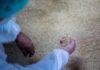 Gli scarti del riso per ridurre la plastica: il progetto SEAT