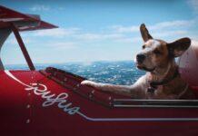 A Natale anche il cane ha diritto di sognare nella pubblicità Microsoft