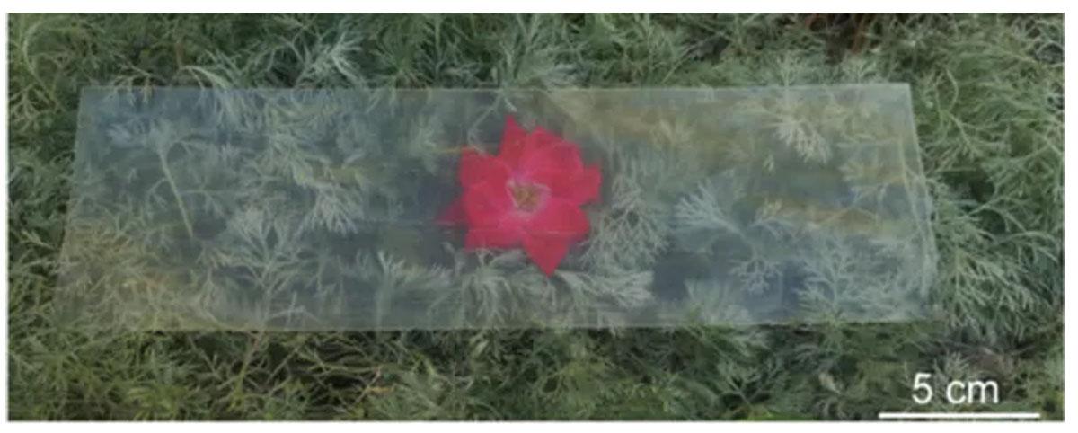 Scienziati hanno creato il legno trasparente, più forte e leggero del vetro