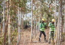 Apple investe sulle foreste: lancia il Restore Fund per 200milioni di dollari