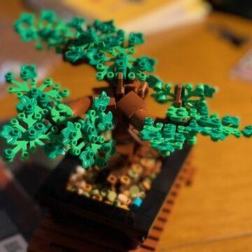 Una storia di Lego, bonsai e pandemia