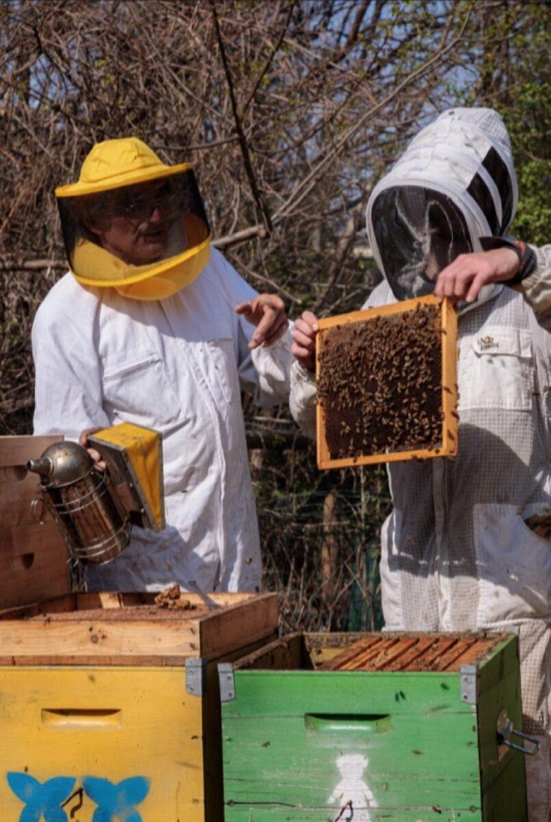 Dyson porta 200 mila api nel cuore di Milano